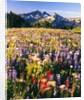 Wildflower Meadow and Tatoosh Range by Corbis
