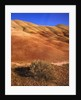 Oregon's Painted Hills by Corbis