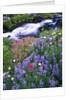 Wildflowers Blooming Along Rushing Creek by Corbis