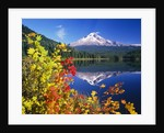 Autumn Leaves Growing Near Mount Hood and Trillium Lake by Corbis