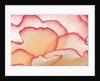 Petals of a Hydrangea by Corbis