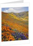 Hillside Wildflowers in Bloom by Corbis