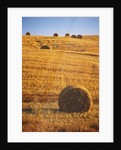Harvested Fields of Hay by Corbis