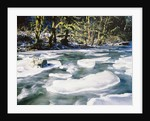 Ice Covering Rocks in Tanner Creek by Corbis