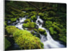 Moss Blanketing Rocks in Olympic National Park by Corbis