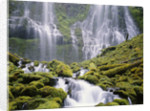 Moss-Covered Rocks in Proxy Falls by Corbis
