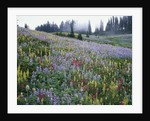 Wildflowers in Bloom on Mount Rainier by Corbis