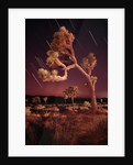 Meteor Trails and Joshua Trees by Corbis