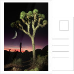 Crescent Moon and Joshua Tree by Corbis