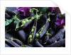 Pea Pods by Corbis