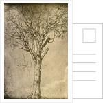 Drawing of a Tree by Leonardo da Vinci