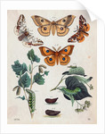 Stages of Butterfly Change by Corbis