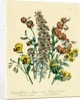 Illustration of Colorful Flowers by Corbis