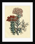 Illustration of Leafy and Colorful Flowers by Corbis