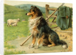 Sheep Dog Waiting by Farm Fence by Corbis