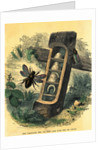 Carpenter Bee with Nest and Food for Its Young by Corbis