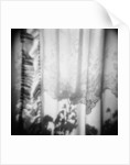 Curtain with Flower Shadow Annette Fournet by Corbis