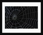 Water Drops on Spiderweb by Corbis