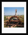 Donkey at an Antiquated Irrigation Wheel by Corbis