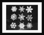 Assorted Snowflake Patterns by Corbis