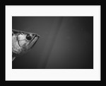 Head of a Fish by Corbis
