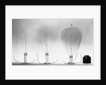 Parts of Incandescent Light Bulb by Corbis
