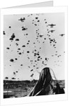 Troops Parachuting Into Korea by Corbis