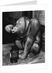 Orangutan Takes His Daily Medicine by Corbis