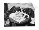 Cats' Celebratory Feast by Corbis