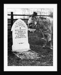A Pet Cemetery by Corbis