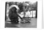 Baboon Pulls a Kitten's Tail by Corbis