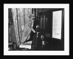 Cat on the Phone by Corbis