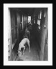 Greyhounds Being Fed in a Kennel by Corbis