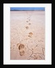 Bootprints Along Australian Outback by Corbis