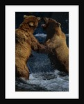 Alaskan Brown Bears in Brooks River by Corbis