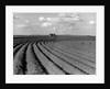 Plowed Fields on a Mechanized Cotton Farm by Corbis