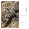 Front End of a Komodo Dragon Lizard by Corbis
