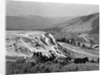 Stagecoach at Mammoth Hot Springs by Corbis