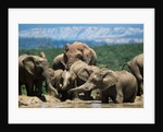 Elephant Herd at a Water Hole by Corbis