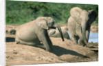 Elephants near a Water Hole by Corbis