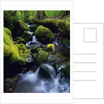 Forest Stream by Corbis