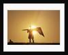 Silhouette of Kite Flier by Corbis