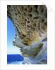 Cliff Eroding at Maroubra Beach by Corbis