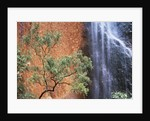 Ayers Rock Waterfall by Corbis