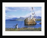 Gentoo Penguin Calling near Abandoned Whaling Ship by Corbis