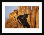 Lion Cub on Termite Mound by Corbis
