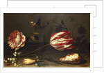 Flowers, Insects, and a Shell by Balthasar van der Ast