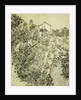 Garden of Flowers by Vincent Van Gogh