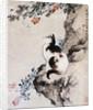 Cat by Shen Quan