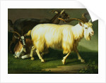 Billy Goats by Wenzel Peter